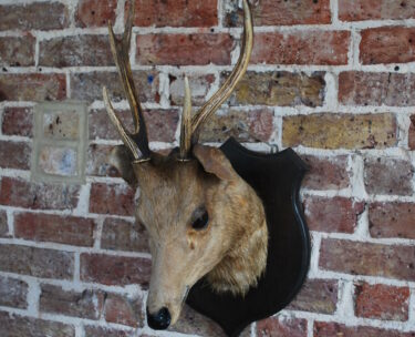 taxidermy stag decorative artefact