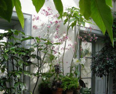 pen klein pop up plants services